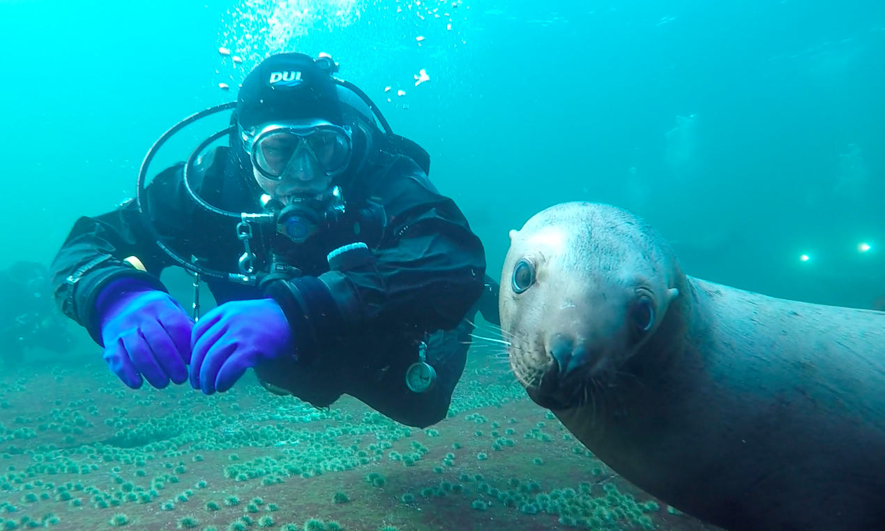 Dave and Sea Lion